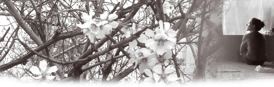 Silvia Di Rienzo, posture méditative et cerisiers en fleurs